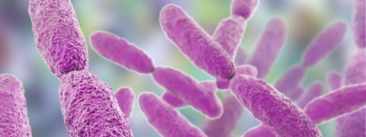 bacterie klebsiella pneumoniae