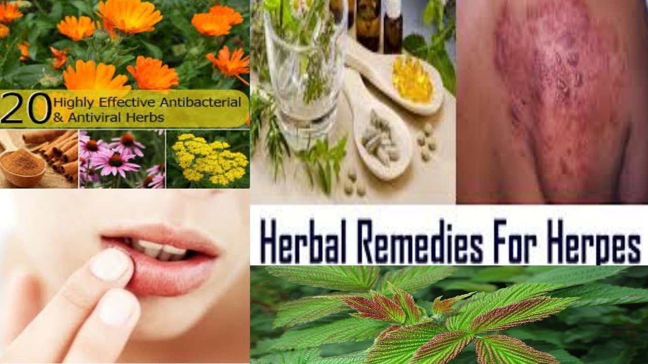 Hpv treatment herbal Human papillomavirus treatment herbal