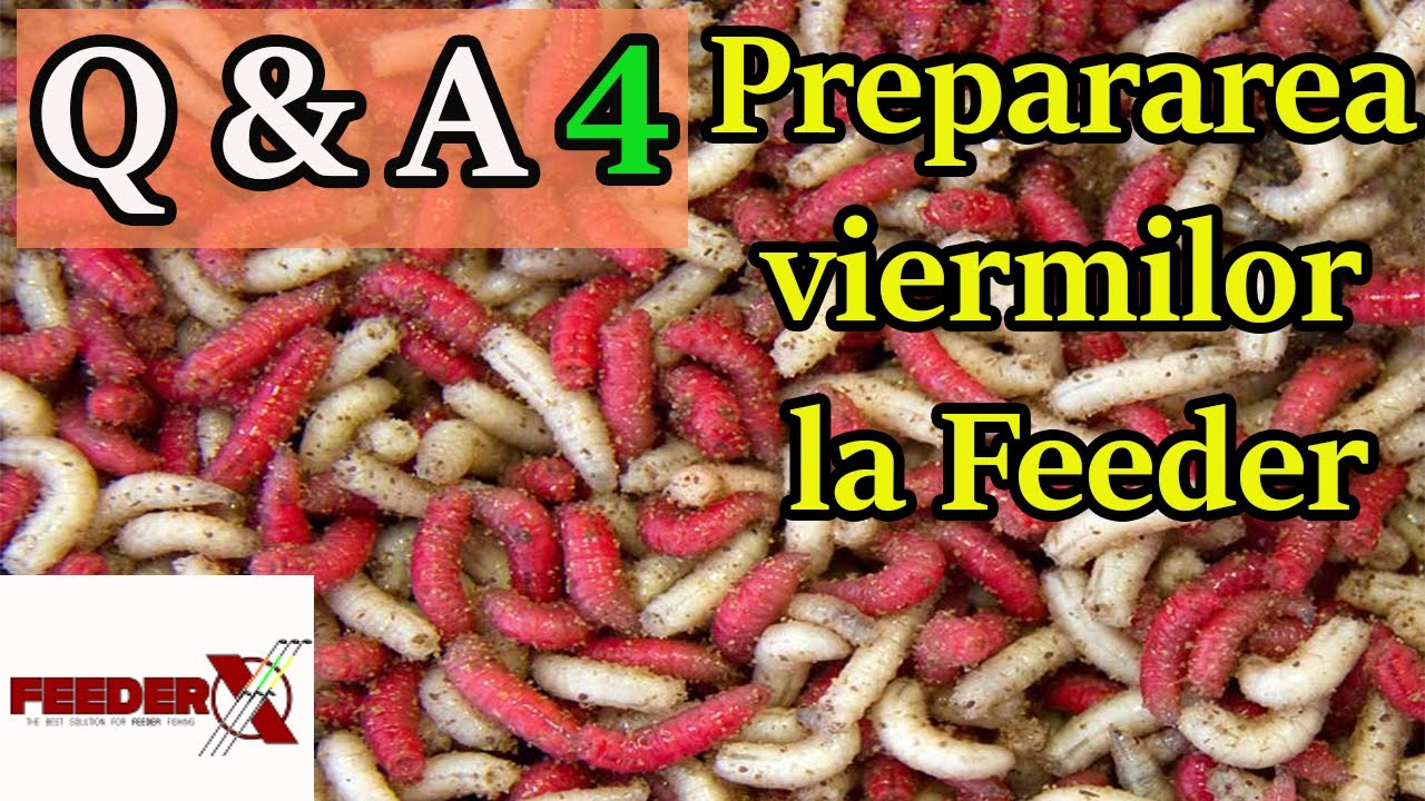 cum să obții viermi papilloma root meaning