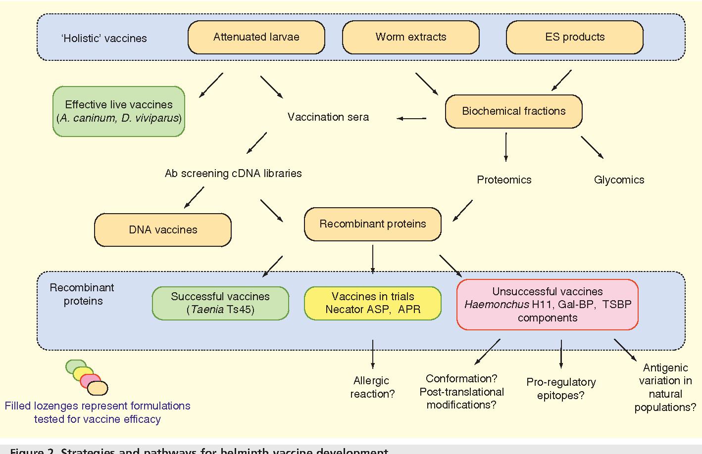 schema de tratament helmint medicină pentru giardie și viermi