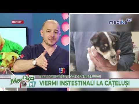 medicină veterinară pentru viermi hpv on the neck