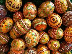 ouă de helmint ca delicioasă