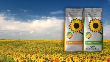 tratamentul floarea soarelui pentru viermi