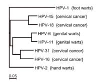 papillomavirus humain detection diagrama de filam platyhelminthes