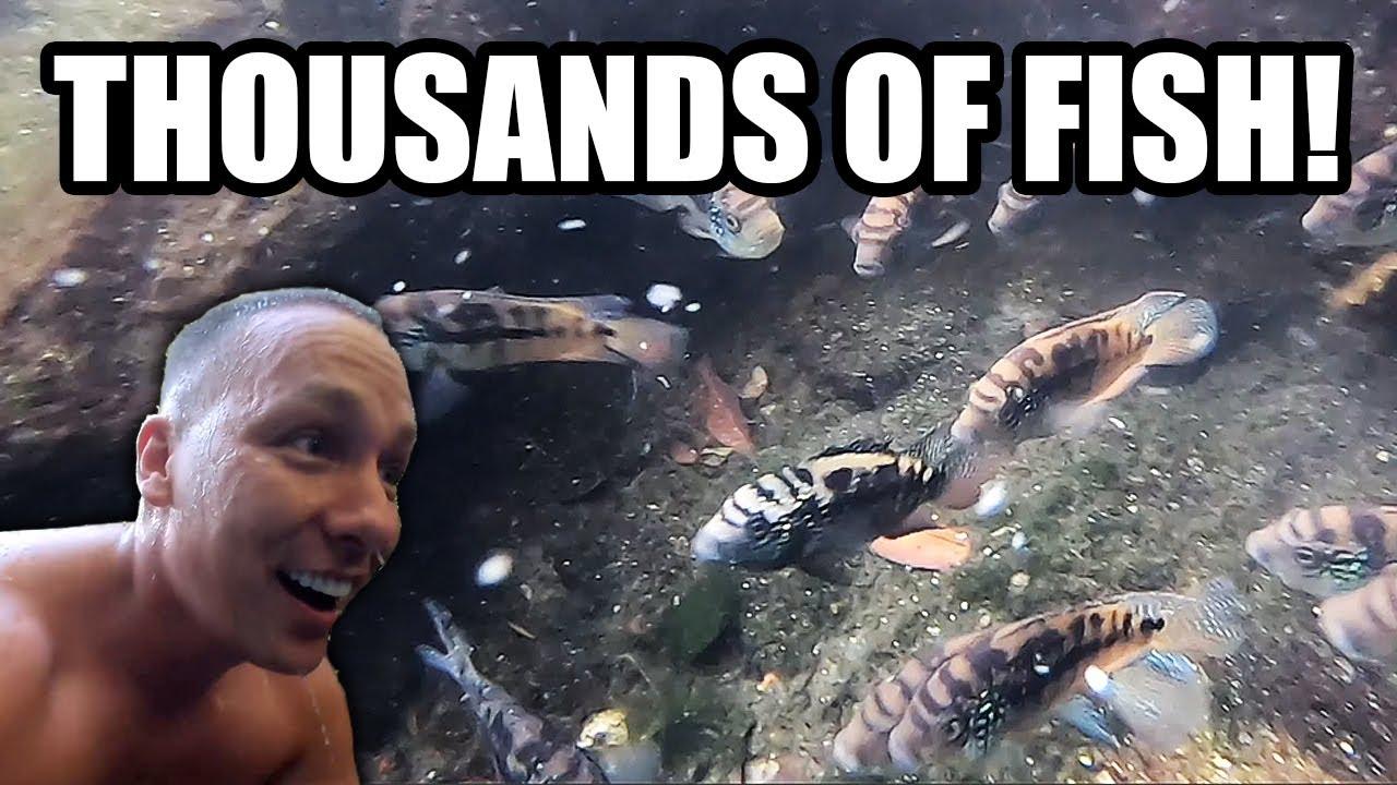 Sfaturi utile pentru a detine un acvariu