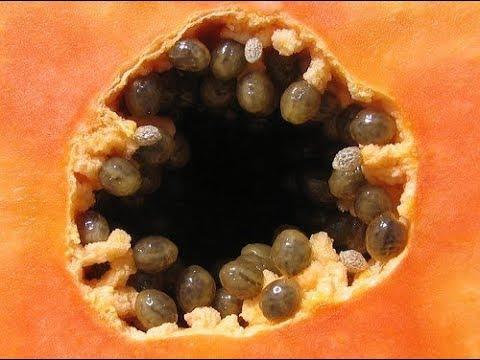 cum să vindecăm viermii cu helmintiază