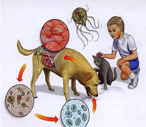 boala parazitara