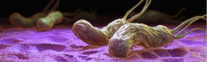Tratamentul infecției cu Helicobacter pylori - Revista Galenus