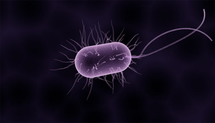 Organism unicelular - Wikiwand