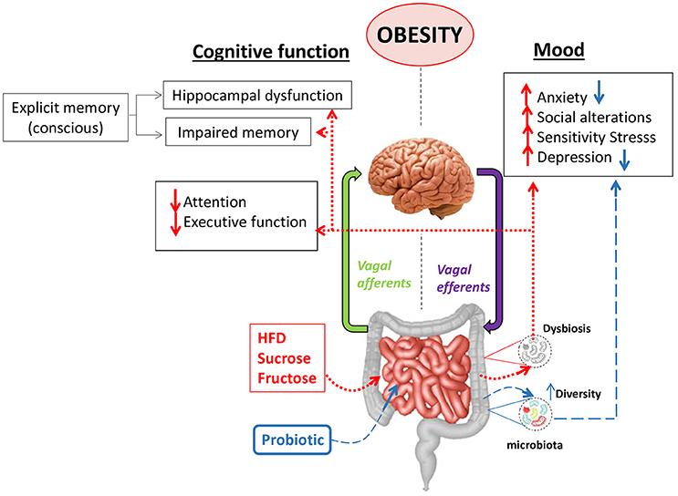 dysbiosis and obesity vitamine pentru verucile genitale