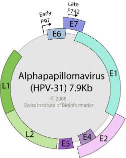 papillomaviridae genome medicamente parazite în timpul sarcinii