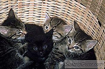 Giardia gatto panacur. Reteta de lapte giardia si gudron