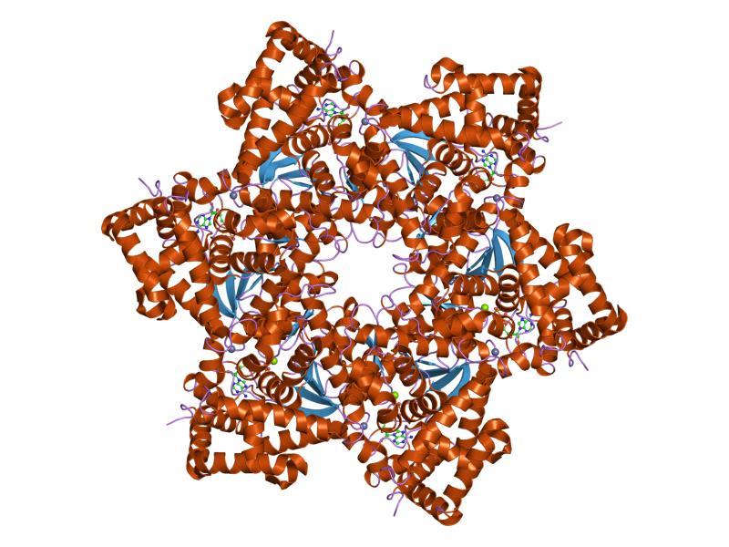 que es papiloma virus en mujeres oxiuros picazon en el ano