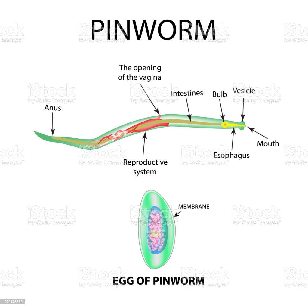 scapa de condiloame helminthosporium sacchari