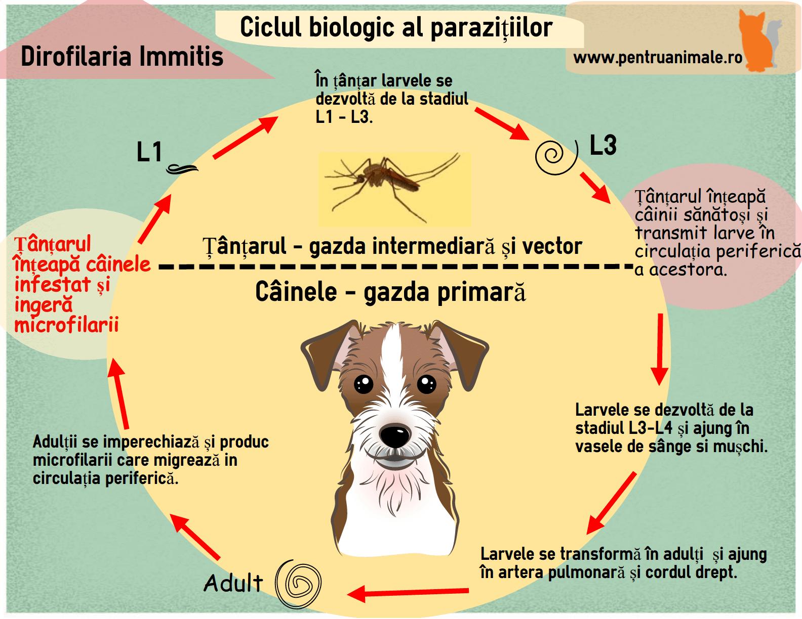 medicină veterinară pentru viermi papilom intraductal b3