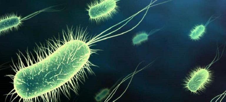 bacterii pe piele eliminar virus papiloma en hombres