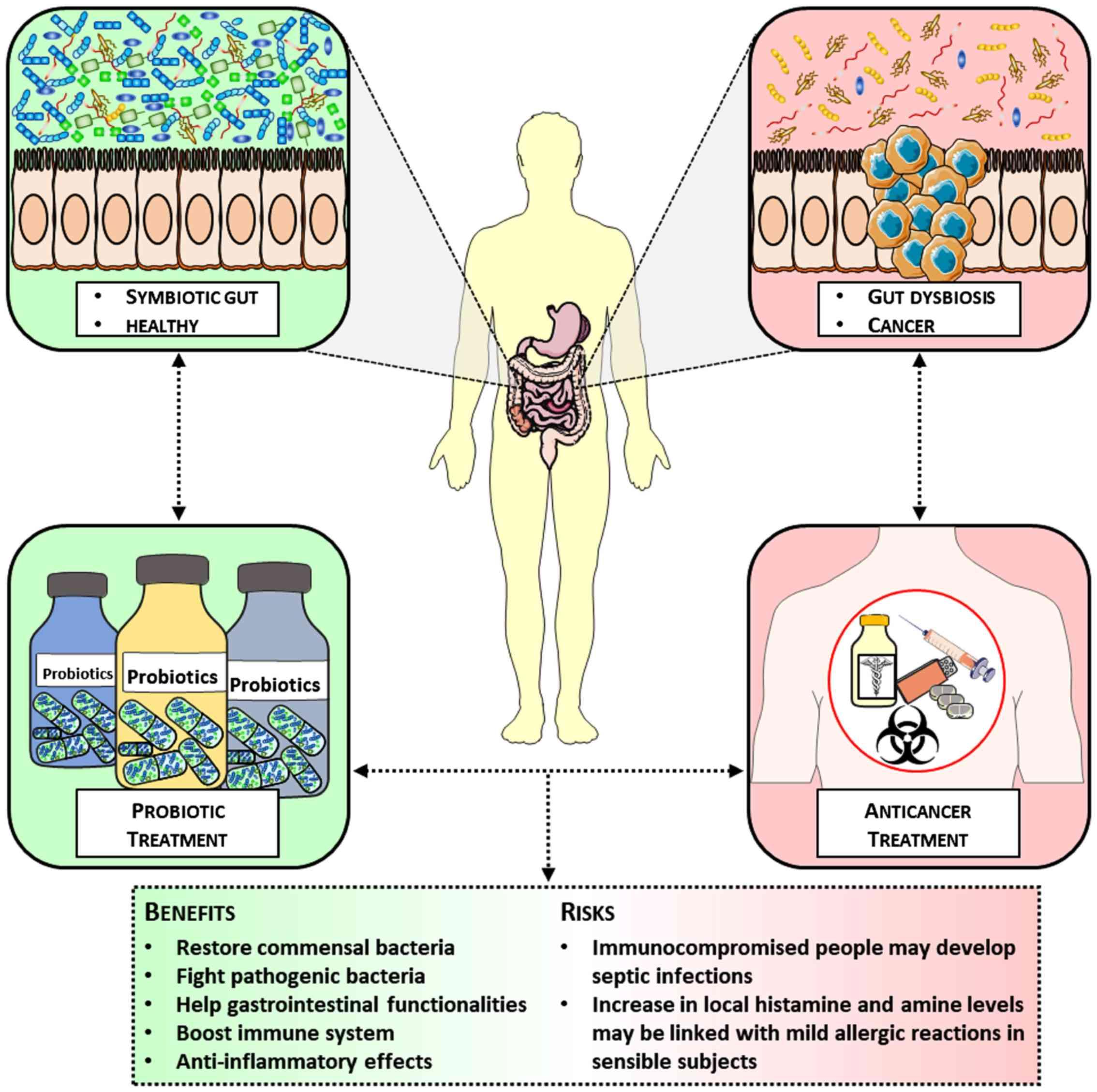 dysbiosis probiotics