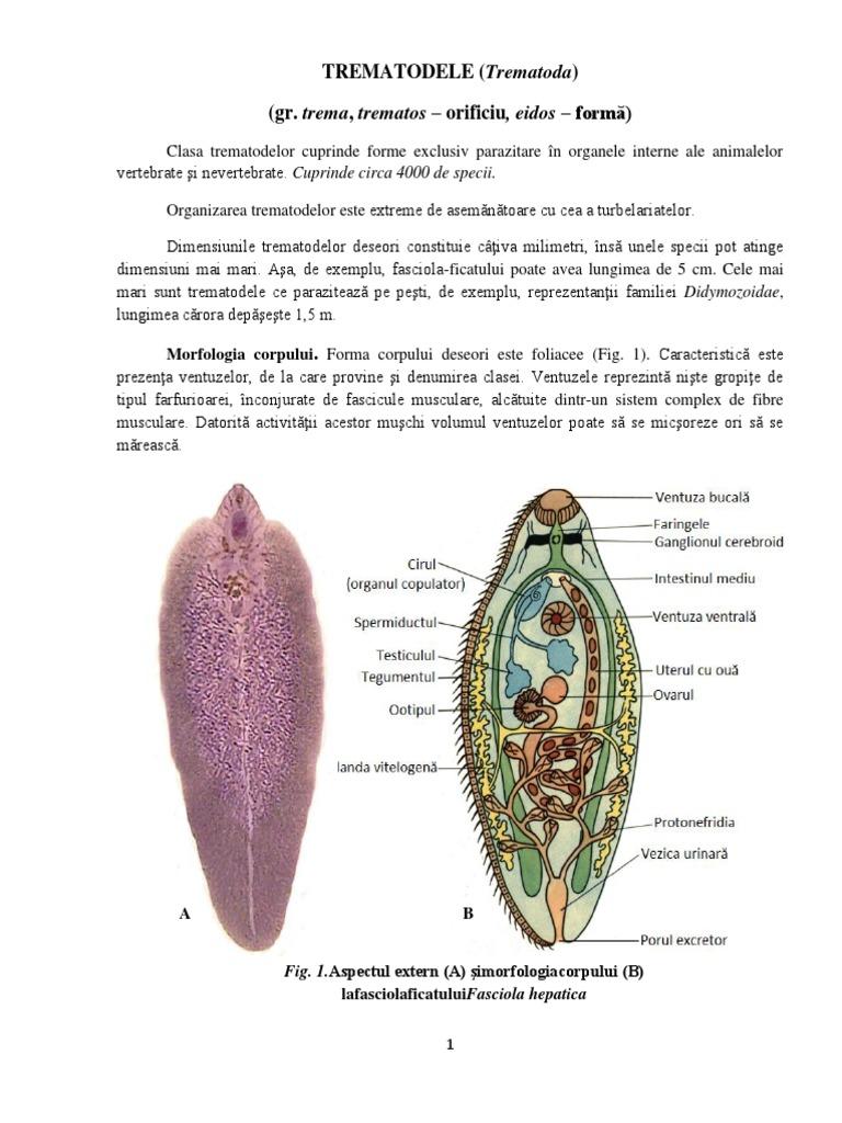 este posibil să eliminați recenziile papiloamelor lumânări pentru verucile genitale la femei