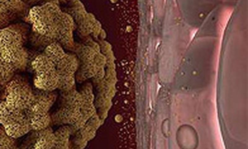 cilveka papillomas viruss hpv manner nachweis