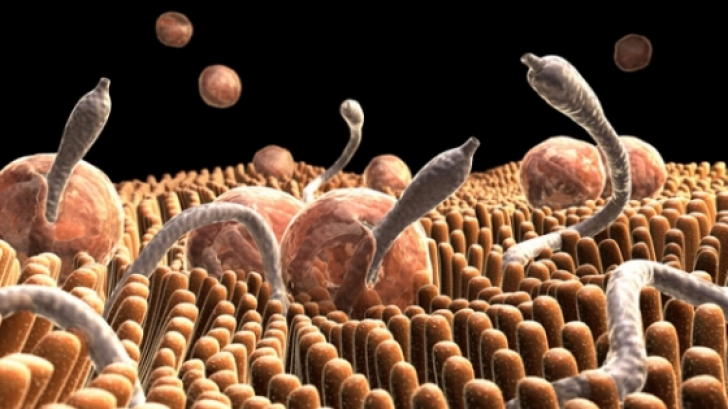 simptomele paraziților pielii