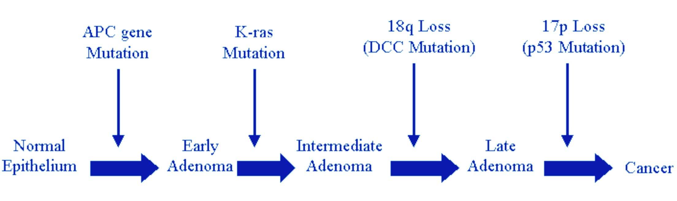 Test de predispozitie la cancerul de colon (APC, MUTYH, MLH1, MSH2, MSH6, EPCAM, STK11)