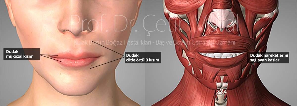 cancer gastric varsta human papilloma mouth
