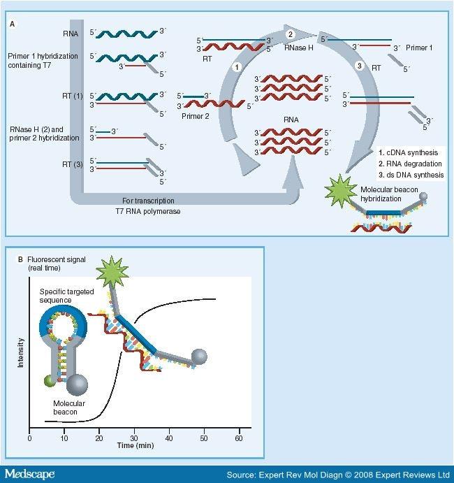 human papillomavirus e6 e7 mrna