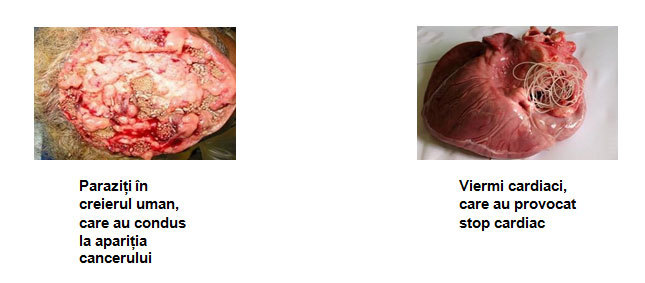medicamente pentru viermi și alți viermi cancer in males from hpv