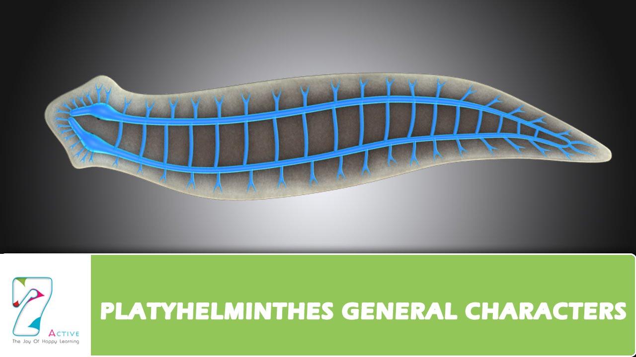 descrierea verucilor genitale se transmit viermi