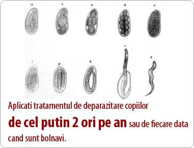 tratamentul cu viermi la vierme tratați papilomul HPP