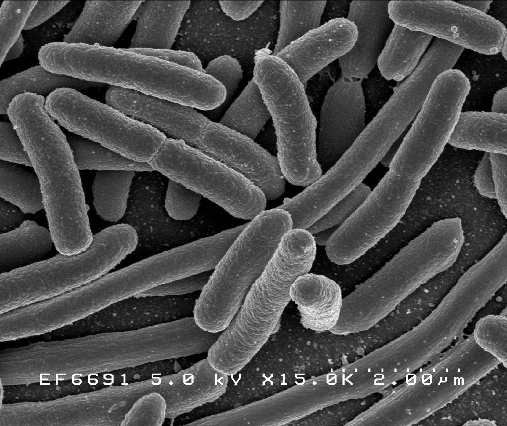 bacterii in scaun papilloma virus come si guarisce