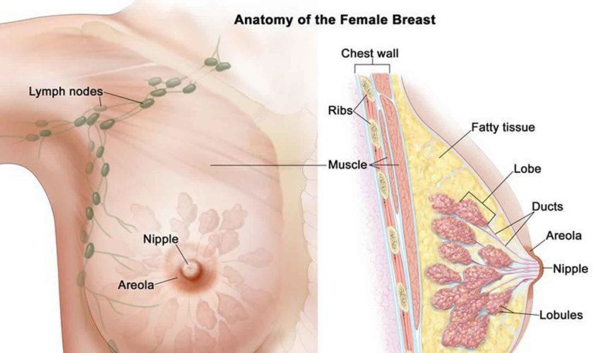 Papiloame pe mamelonul sânului