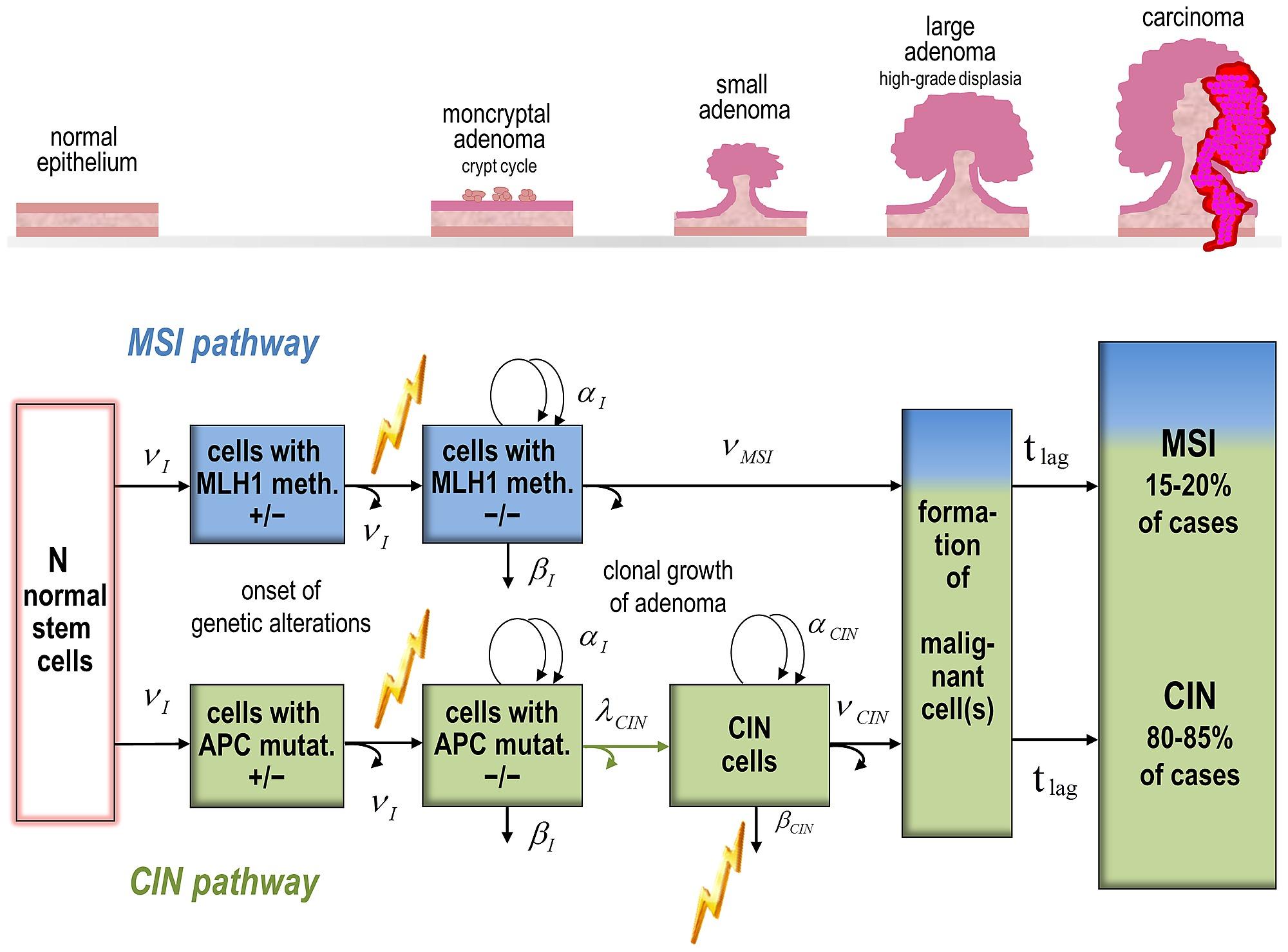 Personalizarea deciziei terapeutice in cancerul colorectal