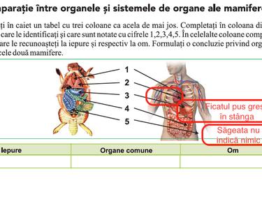 enterobiasis o enterobius forum de tratare a viermilor