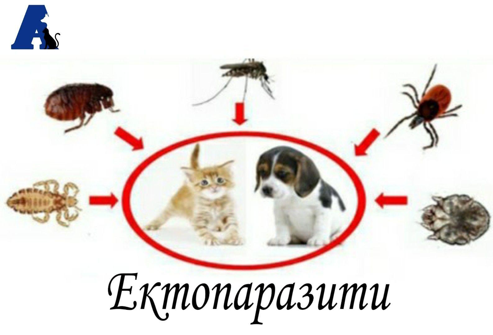 Cum să scapi de paraziți în organism