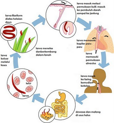 Revizuirea medicațiilor parazitare, Camera Deputatilor