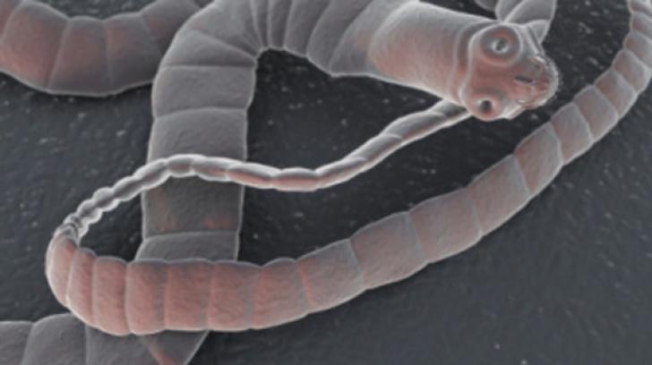 detox suplu beneficii parazit hipodermic