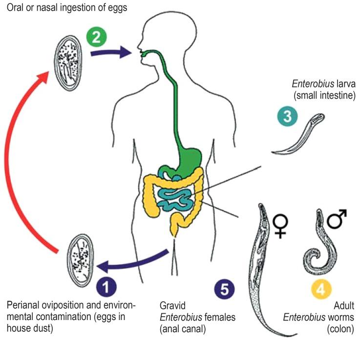 Cum să scapi de paraziți extraintestinali