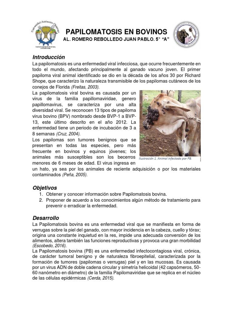 papilomatosis en bovinos sintomas)