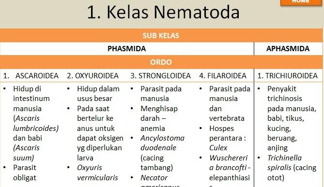 Tratamentul ulcerelor parazitare, Parazitol – păreri, preț, farmacii, prospect, forum