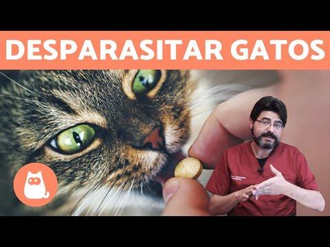Pierderea în greutate los gatos. 30+ Best Dr. Mihaela Bilic images in   diete, sănătate, slăbire