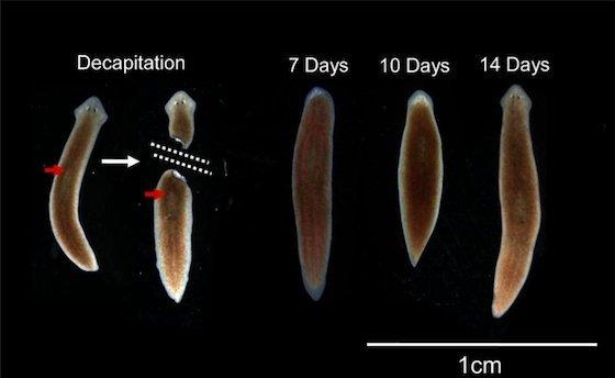 metode de tratament cu papilom