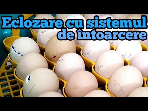 diagnosticul ouălor de helmint)