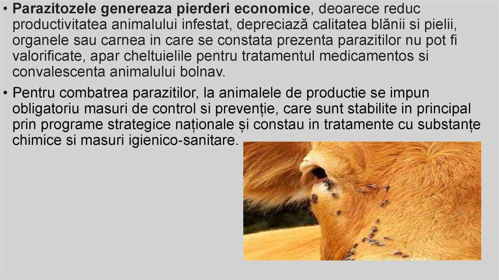 tratamentul paraziților pielii la om