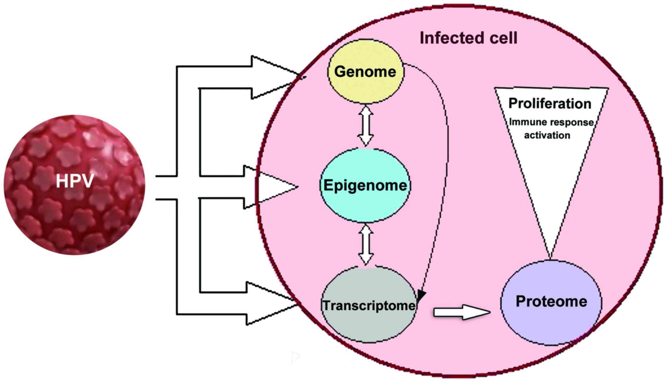 din papilomavirusul uman