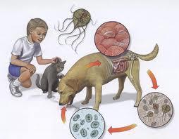 enterobioza este o boală