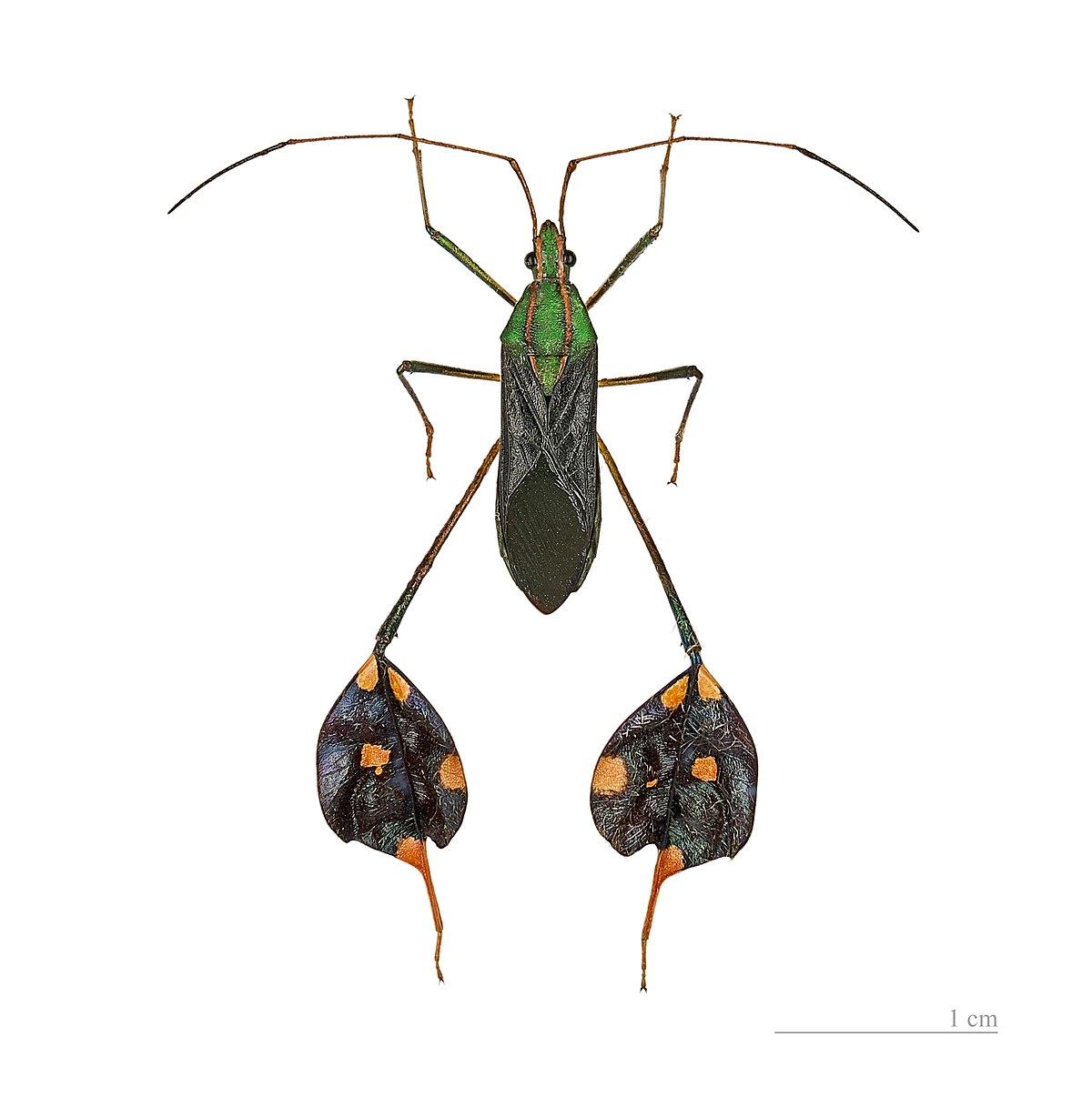 endemică de insecte)
