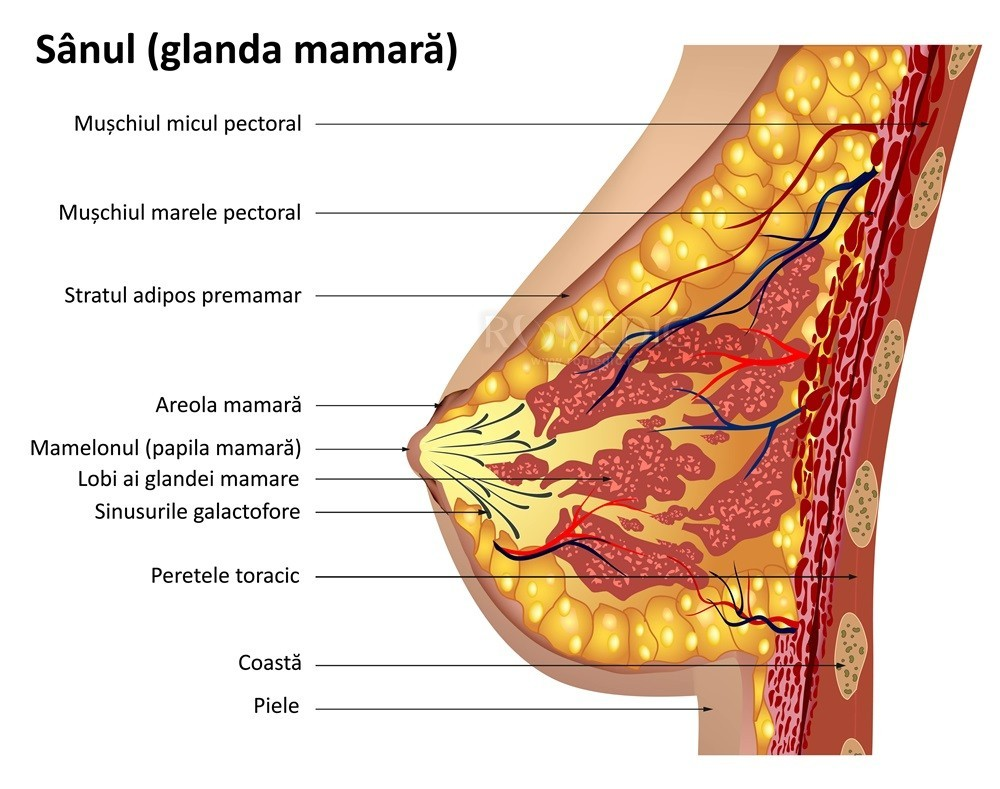 Condiloame în mamelon, Tipuri de papiloame