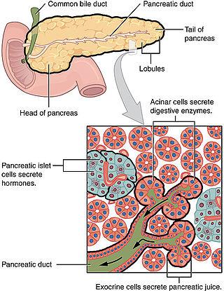 Cauzele și tratamentul viermilor la copii