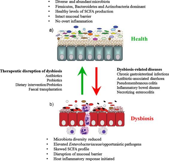 endometrial cancer ovarian trasmissione hpv con saliva